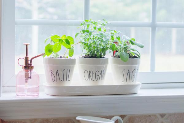 Healthy Home & Garden